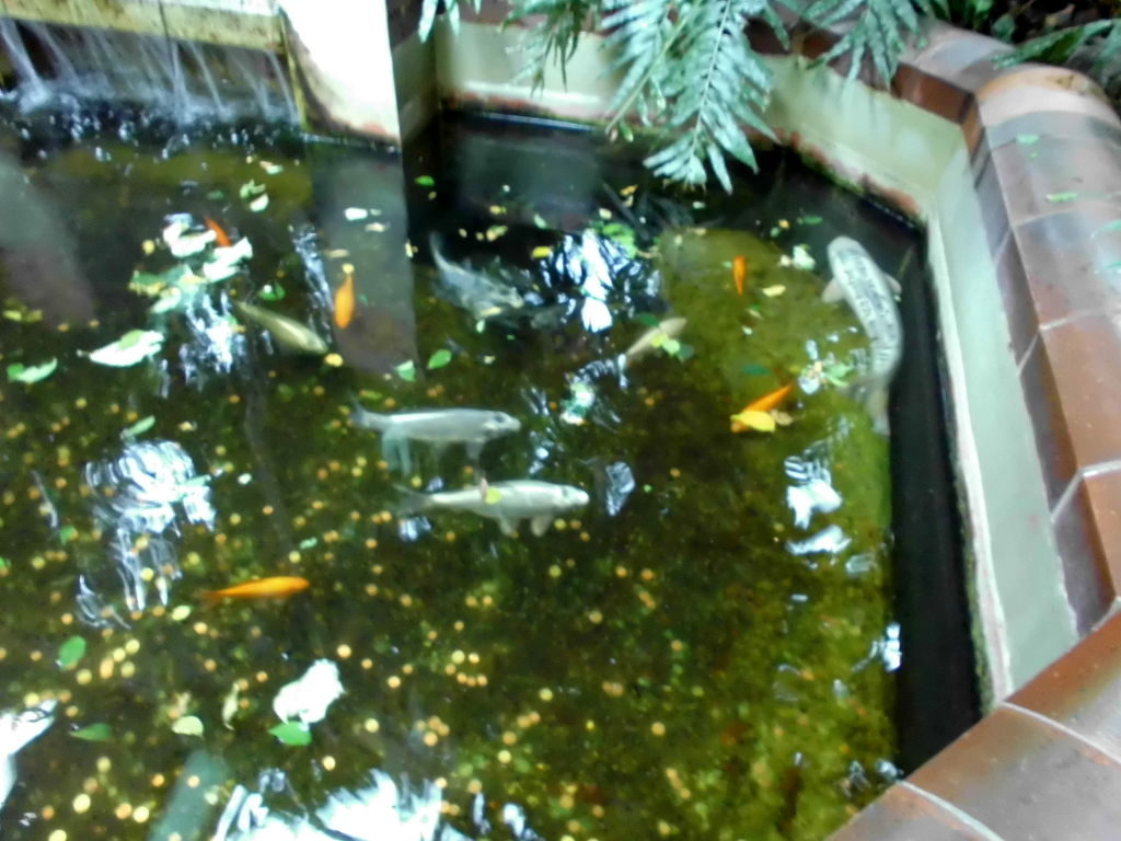 Goldfischteich im Tierpark Berlin
