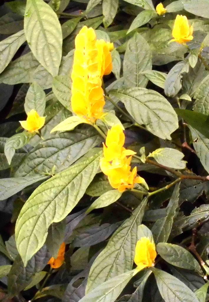 exotische gelbe Pflanzen im Tierpark Berlin